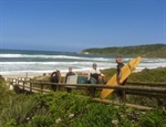 Surf, Yoga and Whales in Santa Catarina